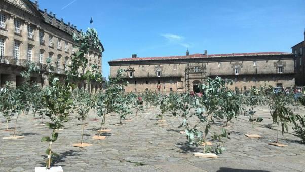 obradoiro eucalipto